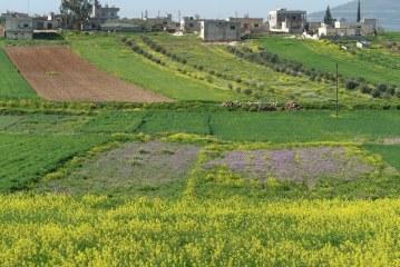 Hamá: Vyčleněno přes tisíc hektarů lesní půdy pro letní zeleninu