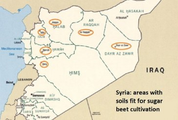 Sýrie snižuje orientační ceny bílého a surového cukru