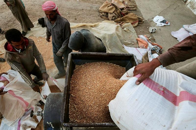 Hasaka: přípravy zemědělců na zimní sezónu vrcholí