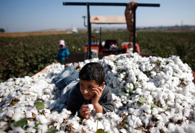 Aktální příležitosti v prodeji použitých strojů na výrobu bavlny