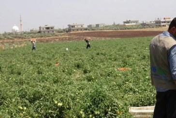 Rozvojové zemědělské projekty pro vysídlence z Ghúty