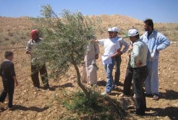 Syrské zemědělství: soustředění na účelné nakládání s vodou