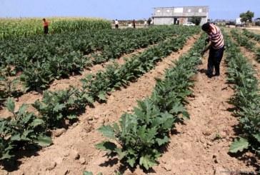 Ministerstvo ekonomiky plánuje podpořit drobné výrobce
