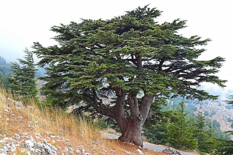 Libanon: Co dál?
