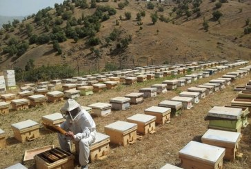 Suwajdá: oživení výroby medu po letech krize