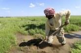 Státní spolupráce se soukromými zemědělci v Hasace